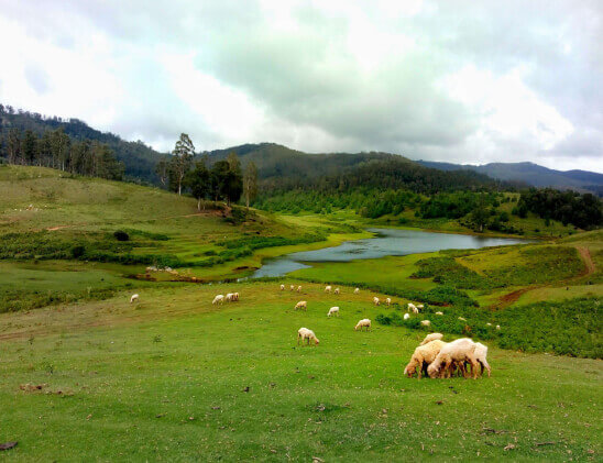 Salem to Kodaikanal Car Booking